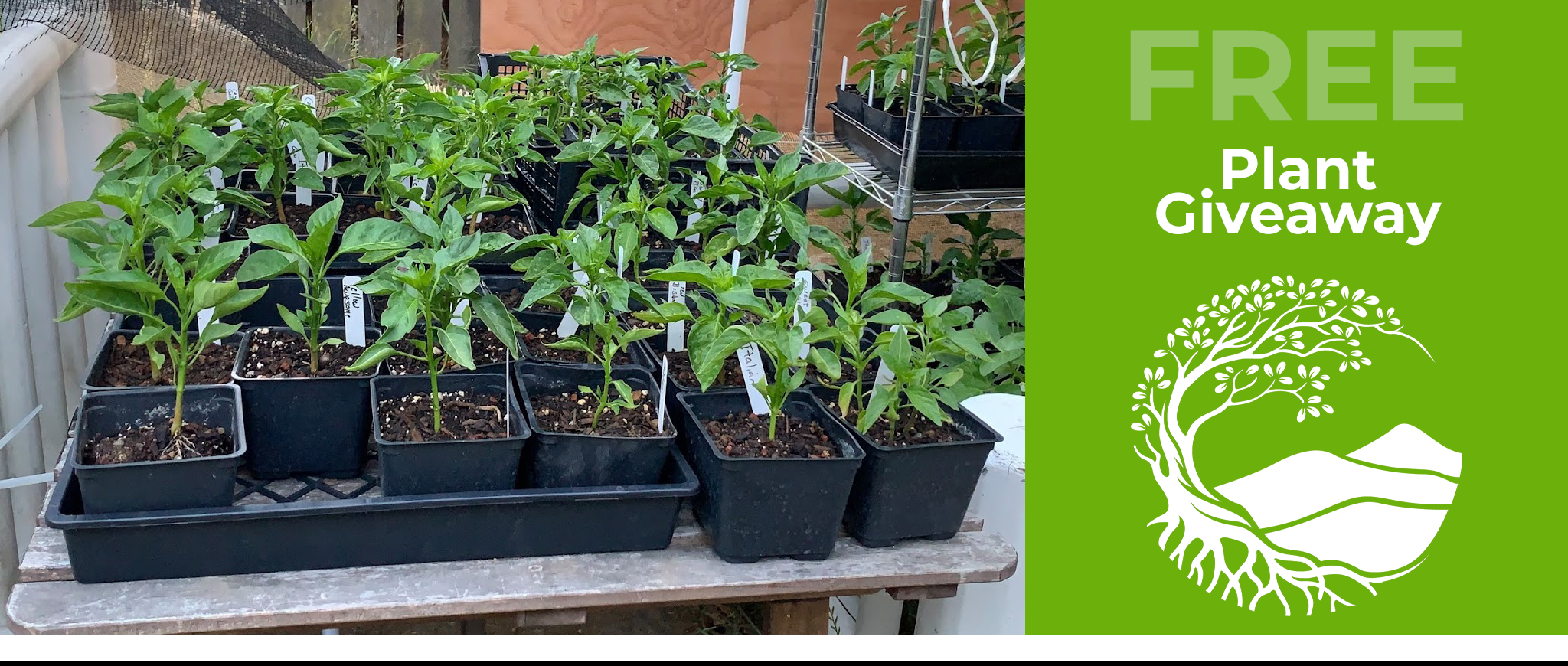 Castro Valley Plant Giveaway 2